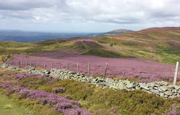 Banner Heather Moorland